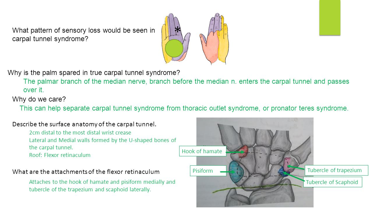 Upper and lower limb nerve injuries - ppt video online download