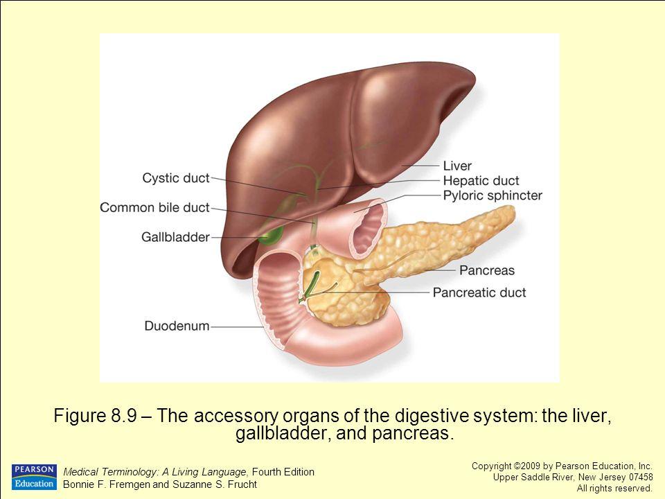 Chapter 8 Digestive System Ppt Video Online Download