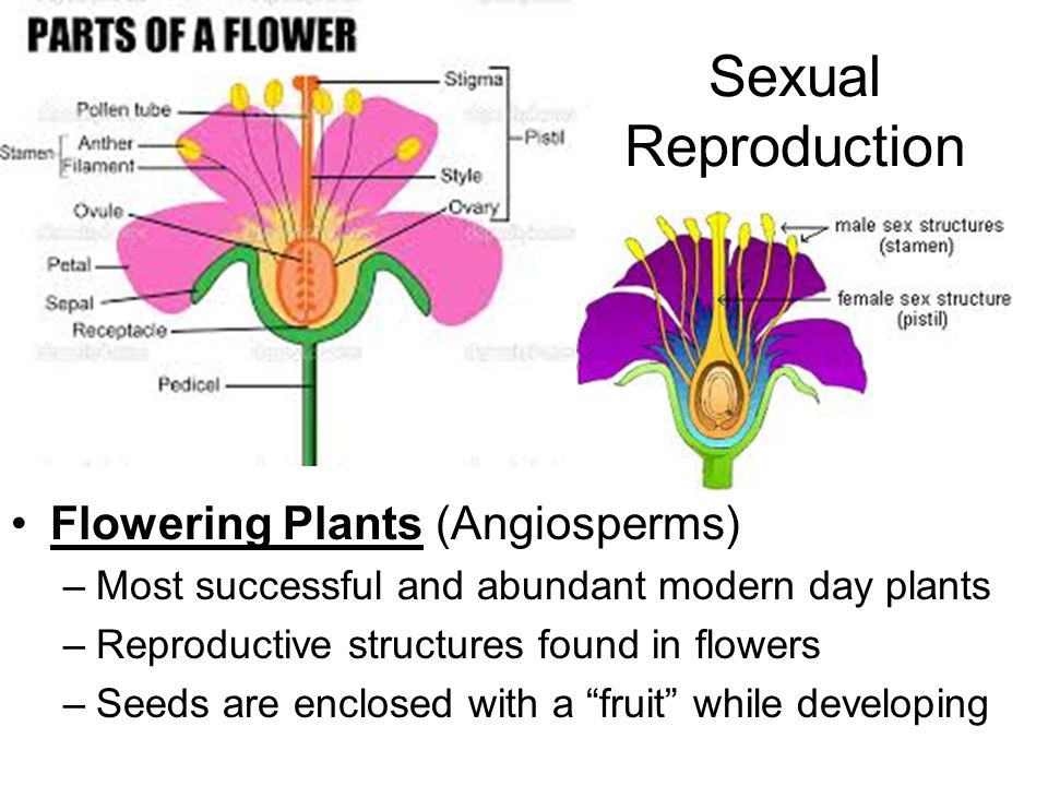 Describe sexual reproduction in plants photo 336