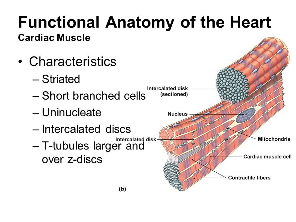 Cardiovascular Physiology - ppt video online download