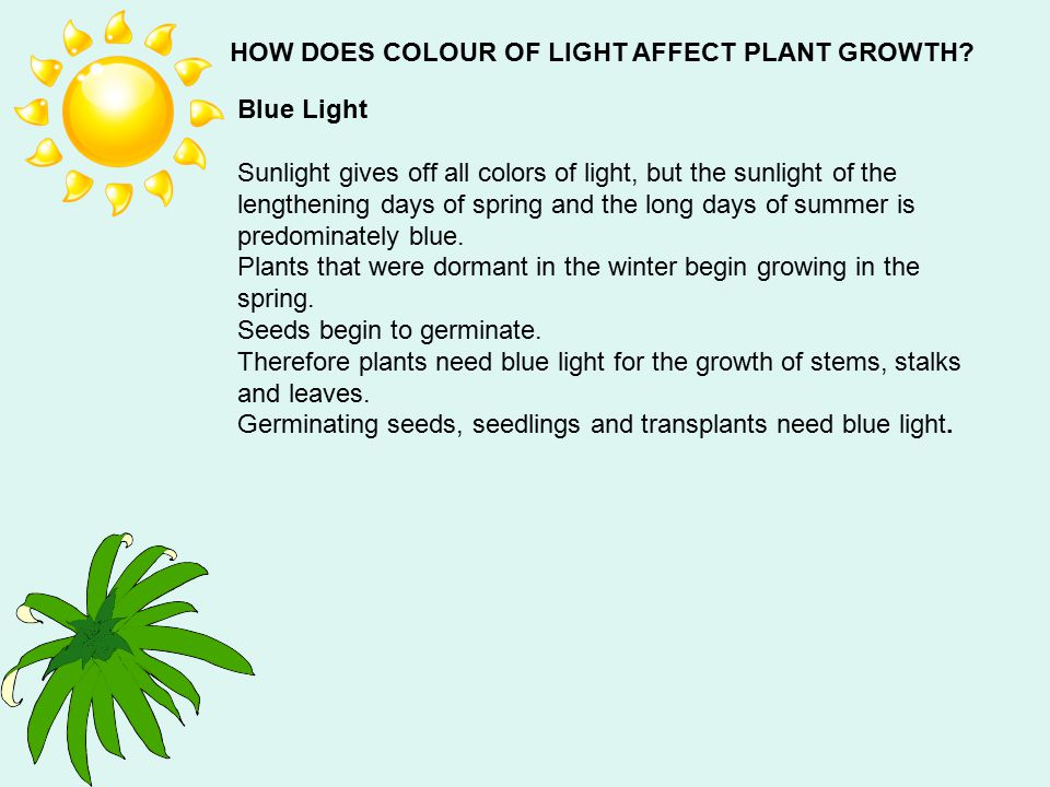 HOW DOES COLOUR OF LIGHT AFFECT PLANT GROWTH