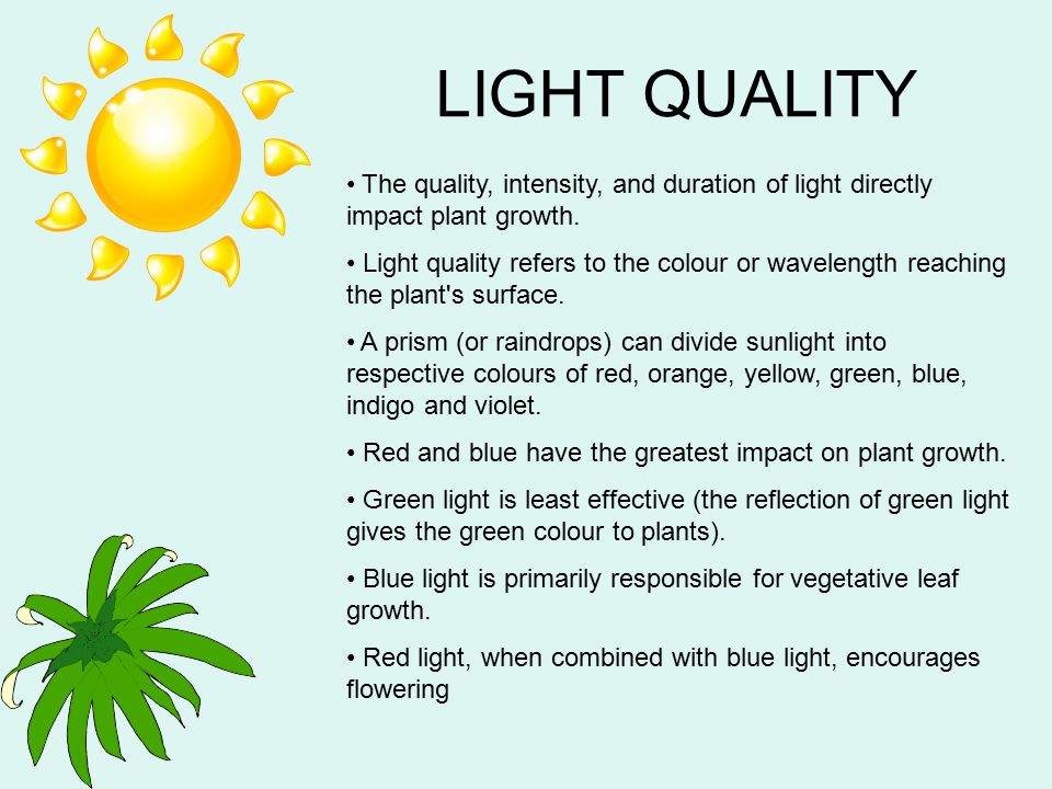 LIGHT QUALITY The quality, intensity, and duration of light directly impact plant growth.