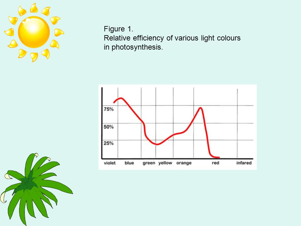 Figure 1. Relative efficiency of various light colours in photosynthesis.