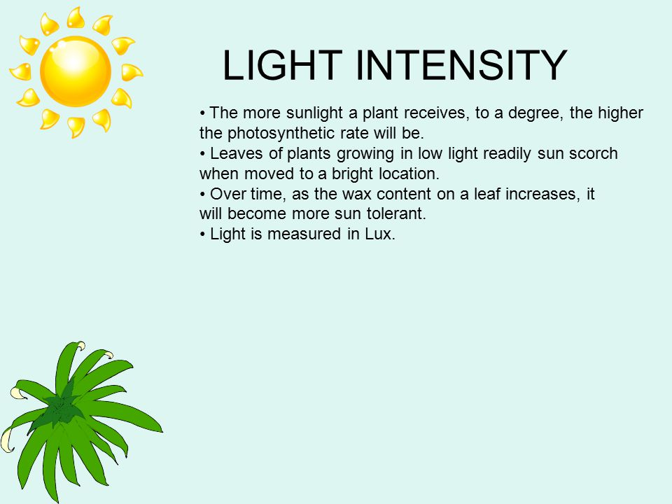 LIGHT INTENSITY The more sunlight a plant receives, to a degree, the higher the photosynthetic rate will be.
