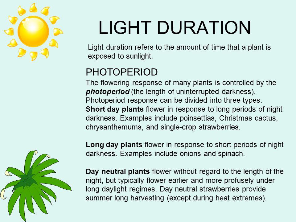 LIGHT DURATION PHOTOPERIOD