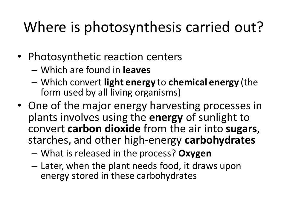 besides Day 1  Making Food Through Photosynthesis A Recipe for Plants as well  furthermore Photosynthesis  Making Energy besides Workbooks » Worksheets On Photosynthesis And Cellular Respiration likewise  as well  besides  additionally Cellular Respiration Diagram Worksheet Photosynthesis And Worksheets moreover How Mitochondria Produce Energy for the Cell   Photosynthesis in addition Photosynthesis Review Worksheet Answers   Kidz Activities together with  in addition Photosynthesis Notes    ppt video online download besides  furthermore Fermentation worksheet answer key   Download them and try to solve additionally 38 Photosynthesis and Cellular Respiration Worksheet Answers Images. on photosynthesis making energy worksheet answers