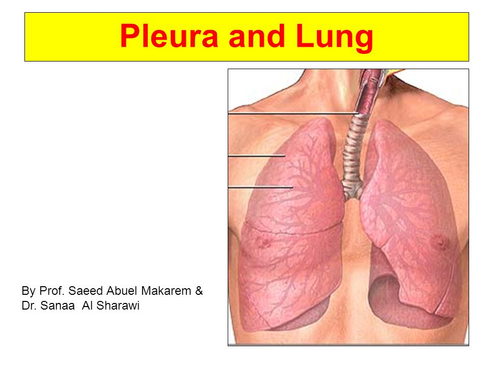 Pleura and Lung By Prof. Saeed Abuel Makarem & Dr. Sanaa Al Sharawi