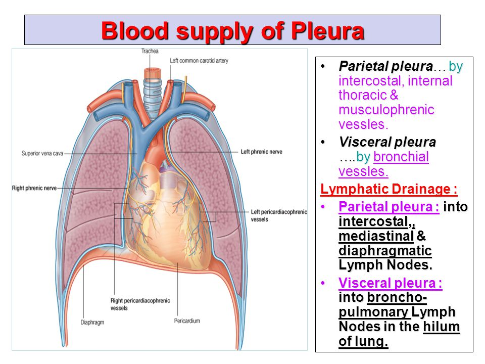 Pleura and Lung By Prof. Saeed Abuel Makarem & Dr. Sanaa Al Sharawi ...