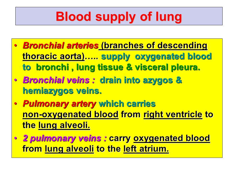 Blood supply of lung