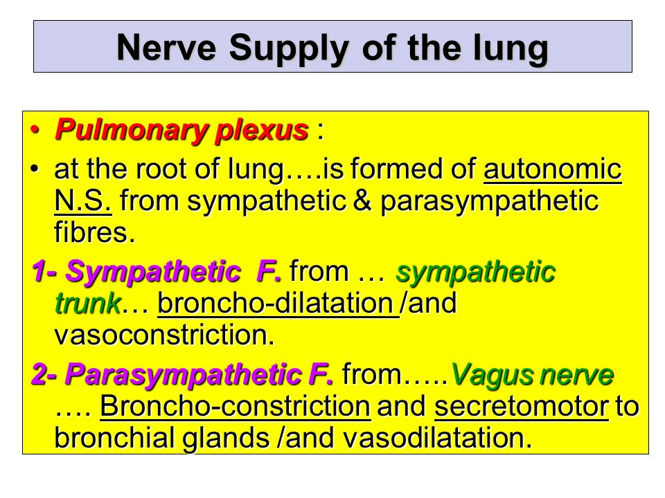 Nerve Supply of the lung