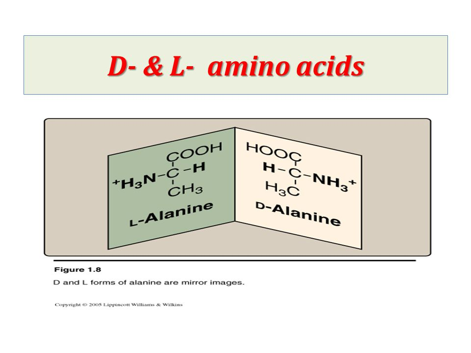isoelectric point of amino acids pdf