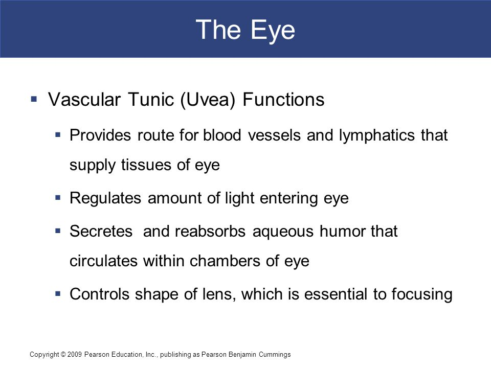 The Eye Vascular Tunic (Uvea) Functions
