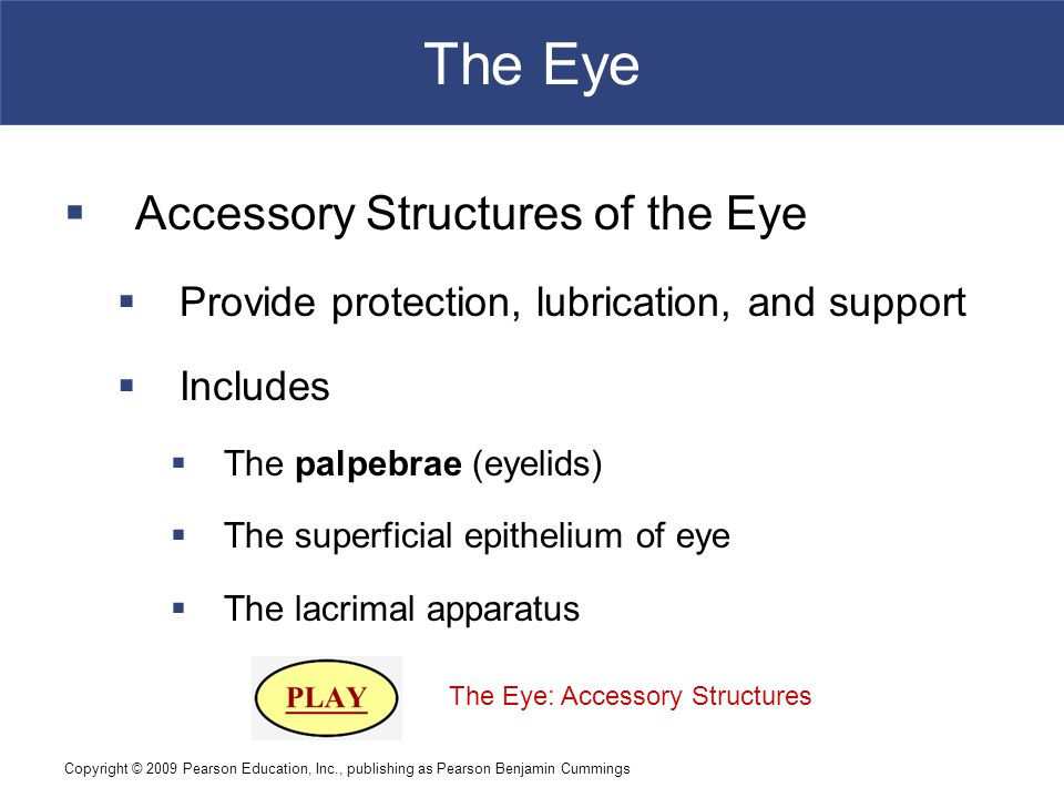 The Eye Accessory Structures of the Eye