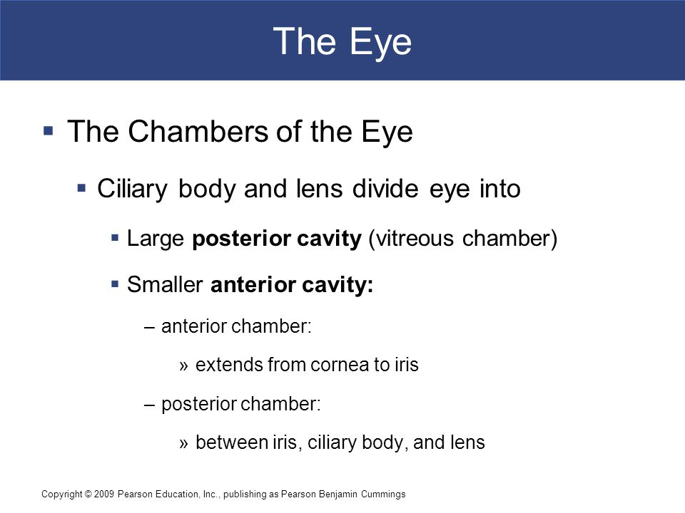 The Eye The Chambers of the Eye Ciliary body and lens divide eye into