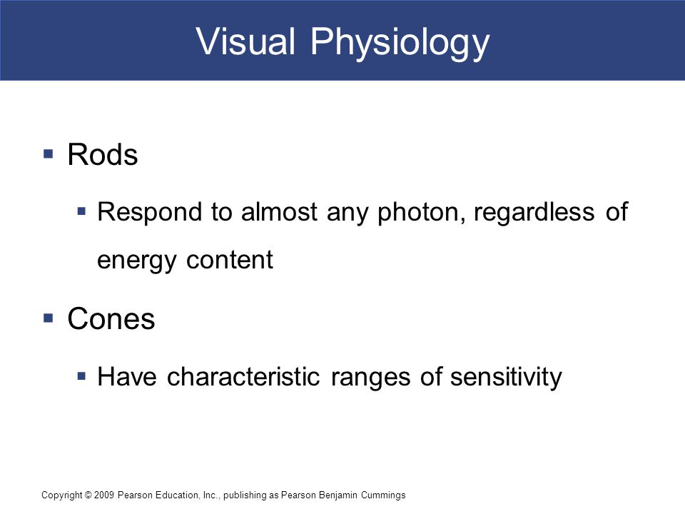Visual Physiology Rods Cones