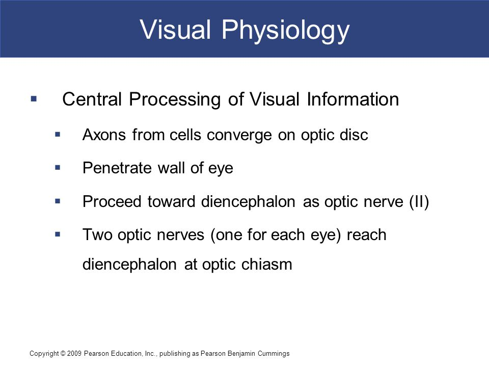Visual Physiology Central Processing of Visual Information