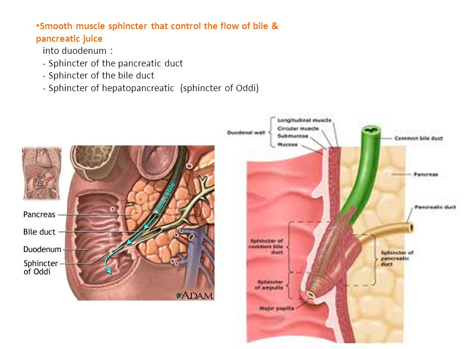 Smooth muscle sphincter that control the flow of bile & pancreatic juice