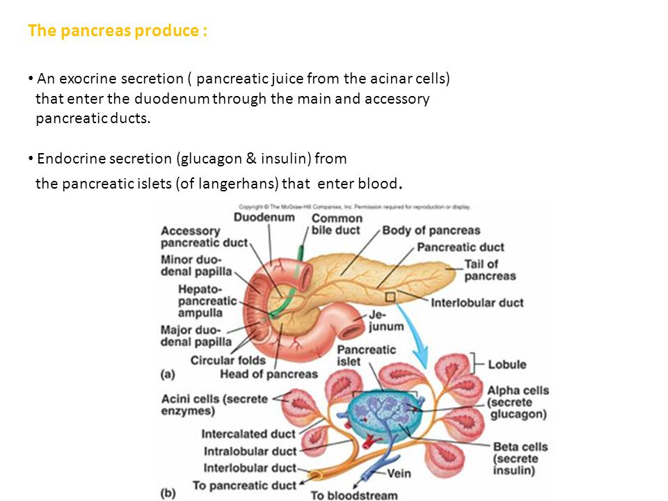 The pancreas produce : An exocrine secretion ( pancreatic juice from the acinar cells) that enter the duodenum through the main and accessory.