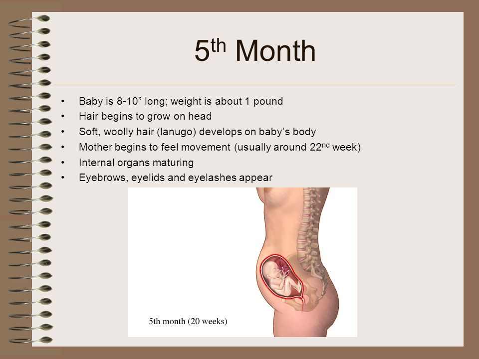 Female Reproductive System, Pregnancy & Health Issues - ppt