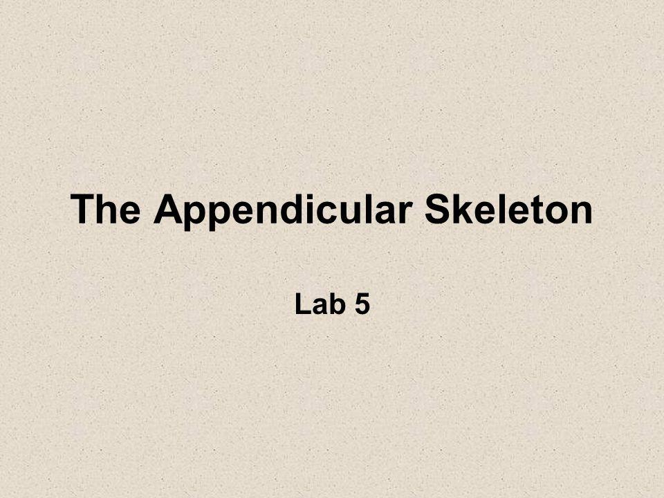 The Appendicular Skeleton - ppt download