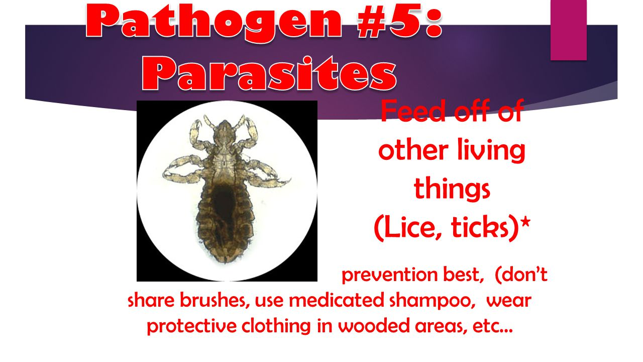 Feed off of other living things (Lice, ticks)*