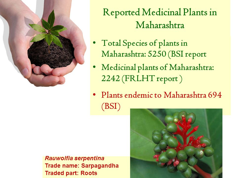 Medicinal Plants can Grow in Pot In Mumbai Presented by Rural