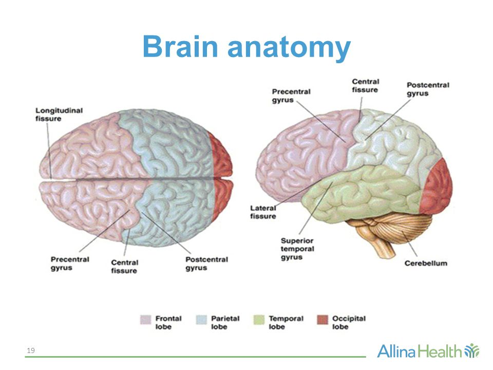 Acute Stroke: The Disease and Rapid Recognition - ppt video online ...