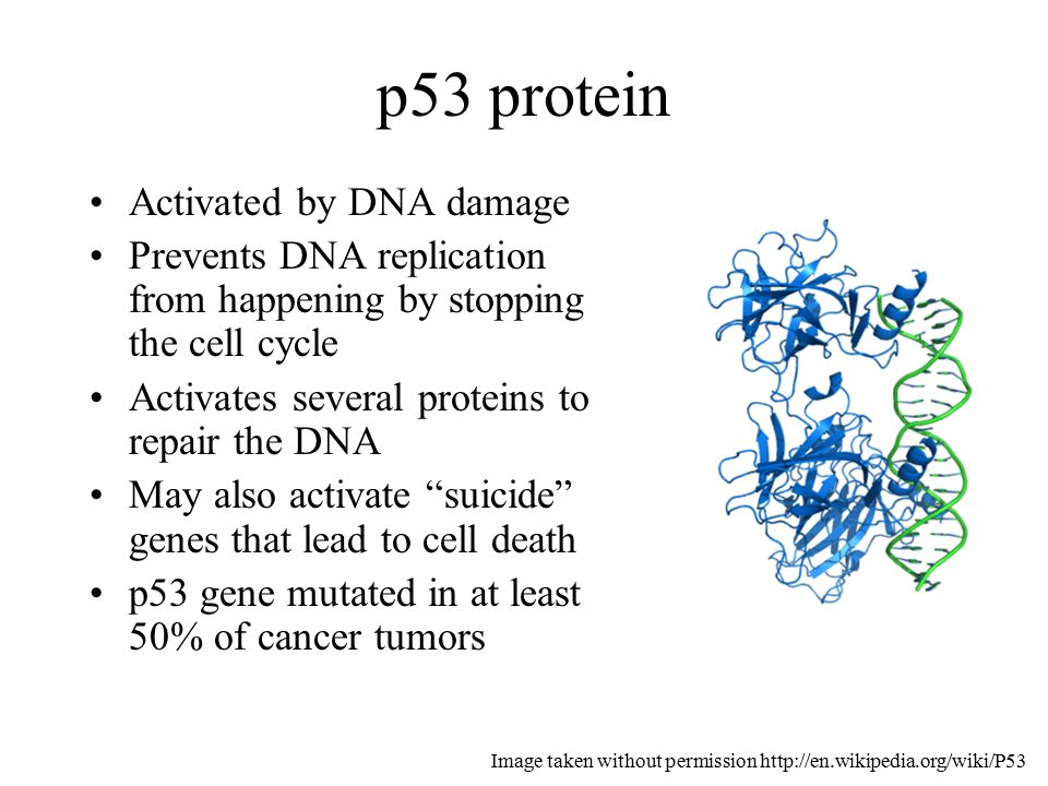 Proofreading and DNA Repair - ppt download