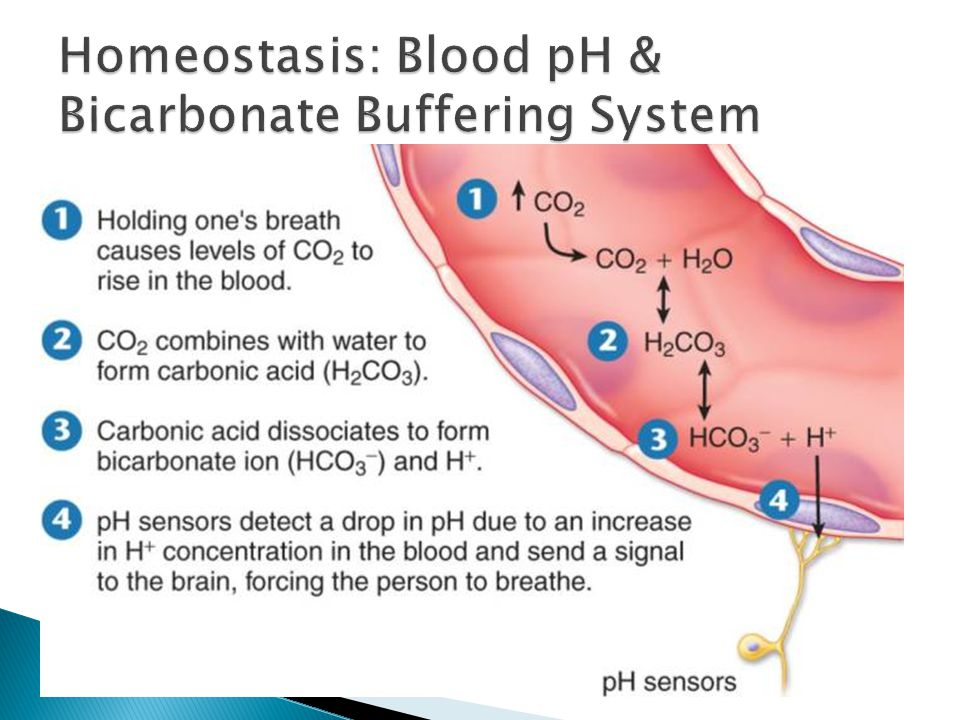 Homeostasis And Feedback In The Body Ppt Video Online Download
