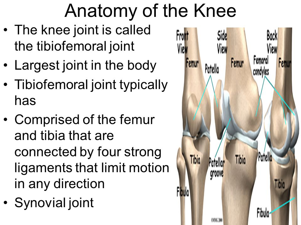 Structures And Related Common Pathologies Of The Knee Ppt Video