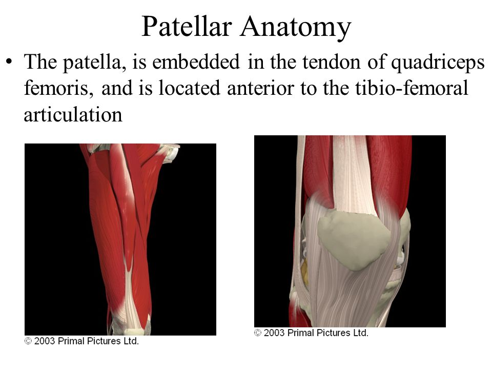 Structures and Related Common Pathologies of the Knee - ppt video ...