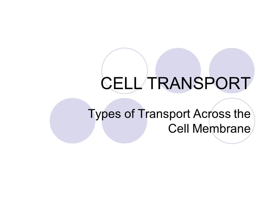Types of Transport Across the Cell Membrane
