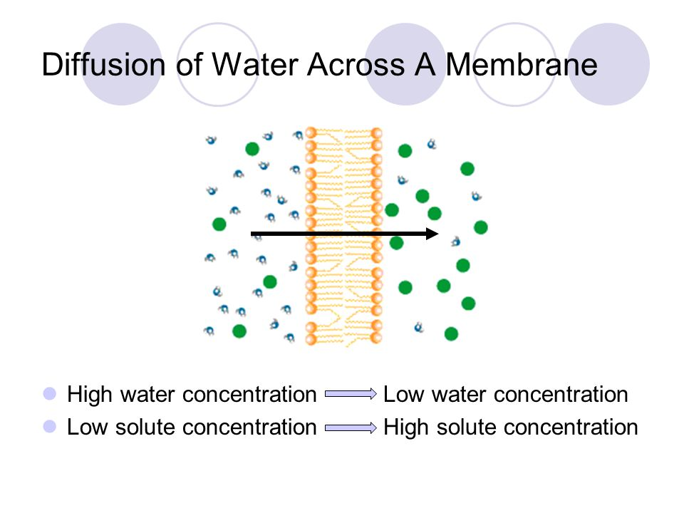 Diffusion of Water Across A Membrane