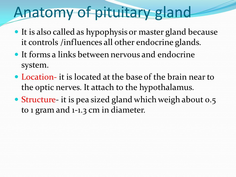 Pituitary gland the pituitary is a pea-sized gland that is housed.