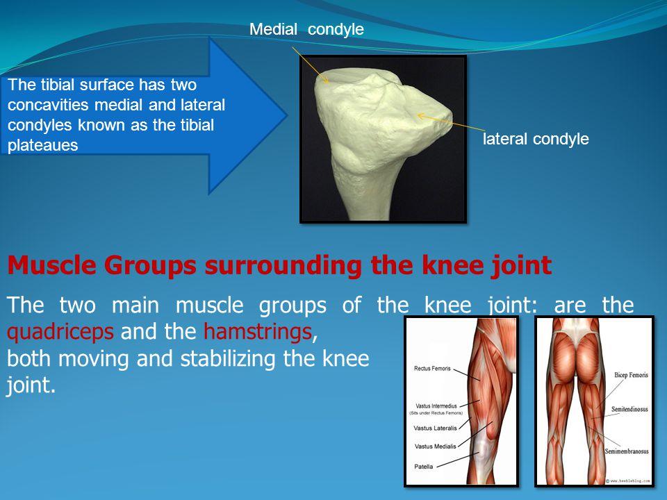 Knee Joint Biomechanics Ppt Video Online Download