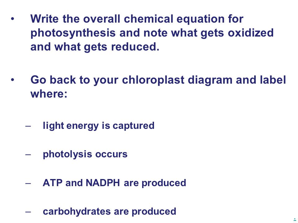 Chapter 10 Photosynthesis Ppt Video Online Download