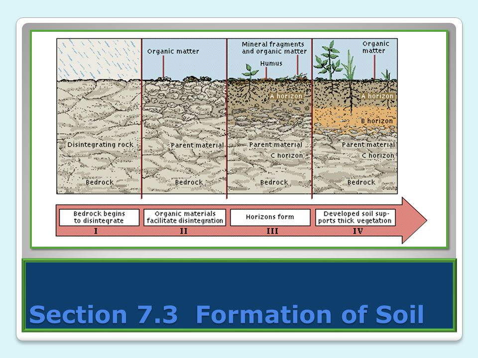 Section 7.3 Formation of Soil