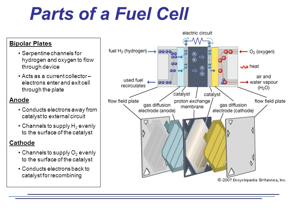 Fuel Cells and the Hydrogen Economy - ppt video online download