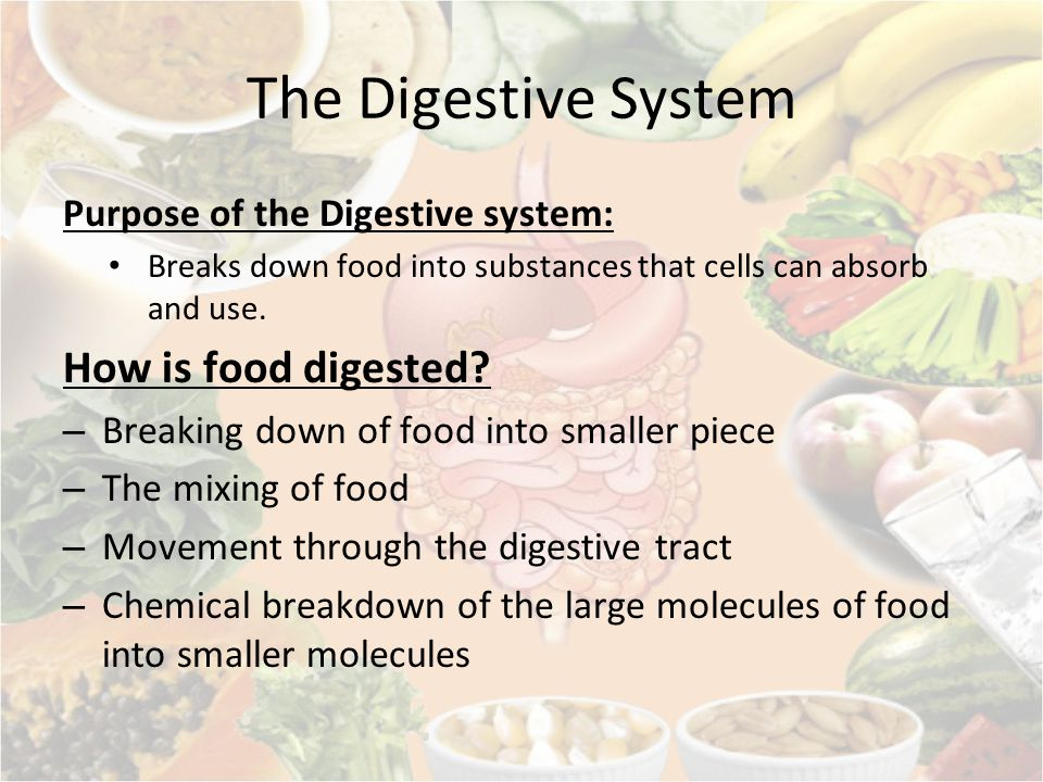 The Digestive System How is food digested