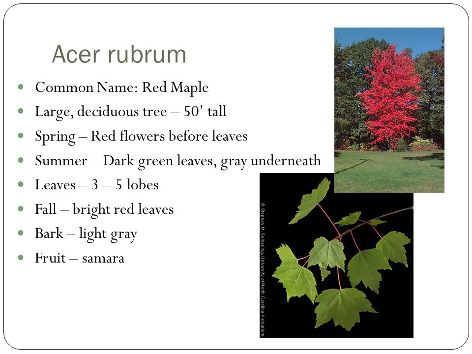 Plant Identification Trees I Ppt Video Online Download