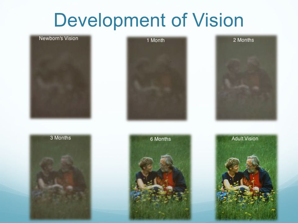 Development of Vision