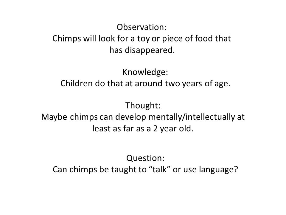 Chimps will look for a toy or piece of food that has disappeared.
