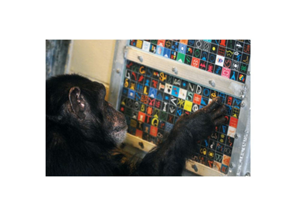 Chimps use words as symbols, but they don't apply grammatical rules