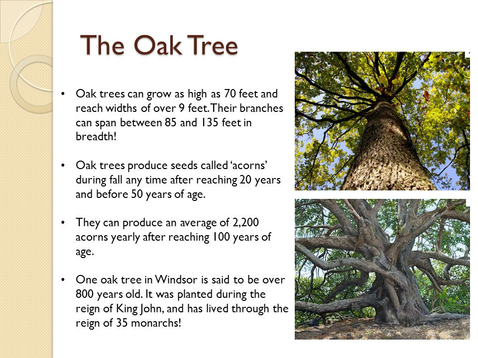 The Oak Tree Symbolism In Writing Ppt Video Online Download