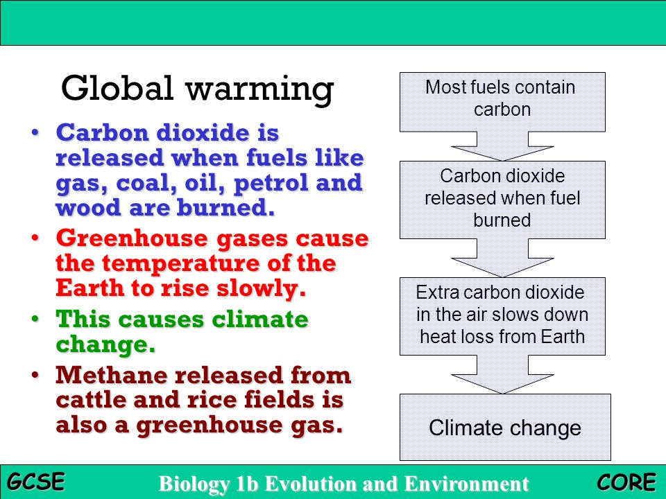 Global warming Most fuels contain. carbon. Carbon dioxide is released when fuels like gas, coal, oil, petrol and wood are burned.