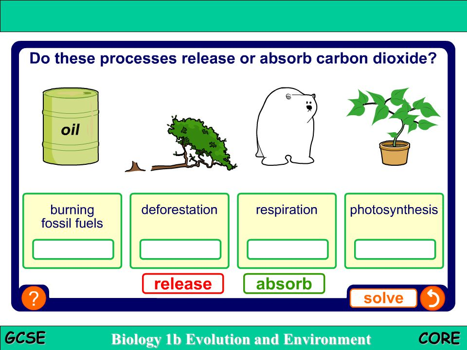 The carbon sink