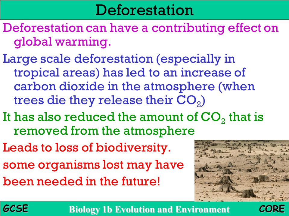 Deforestation Deforestation can have a contributing effect on global warming.