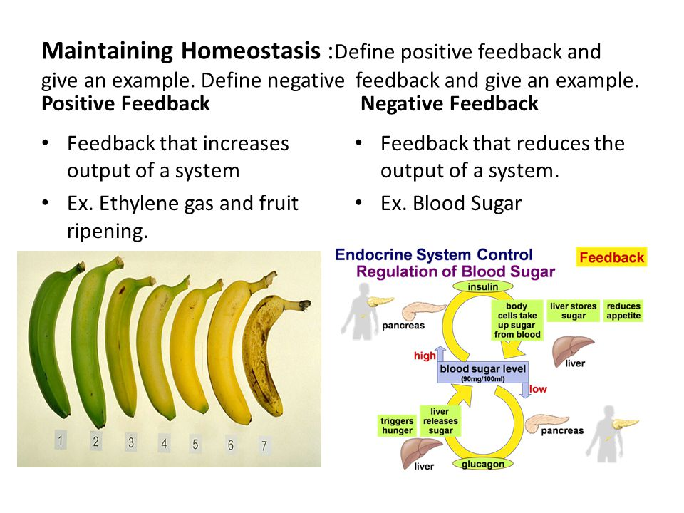 Solved: what is positive and negative feed back. Give one.