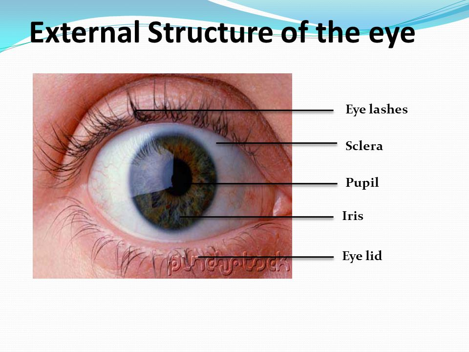 The Eye: Structure & Function - ppt video online download
