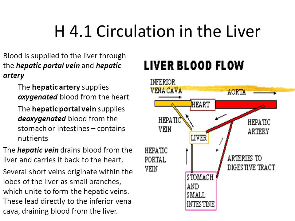 H 4 Functions Of The Liver Ppt Video Online Download